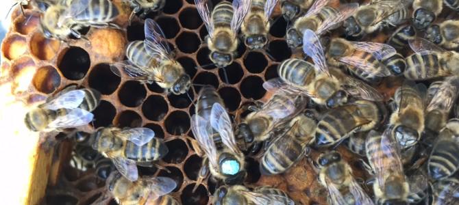 Honigbienen kehren zurück ins Johannestal