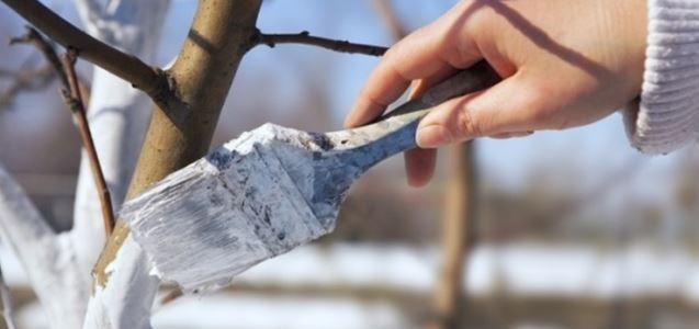 Des Baumes neue Kleider – Der Weißanstrich