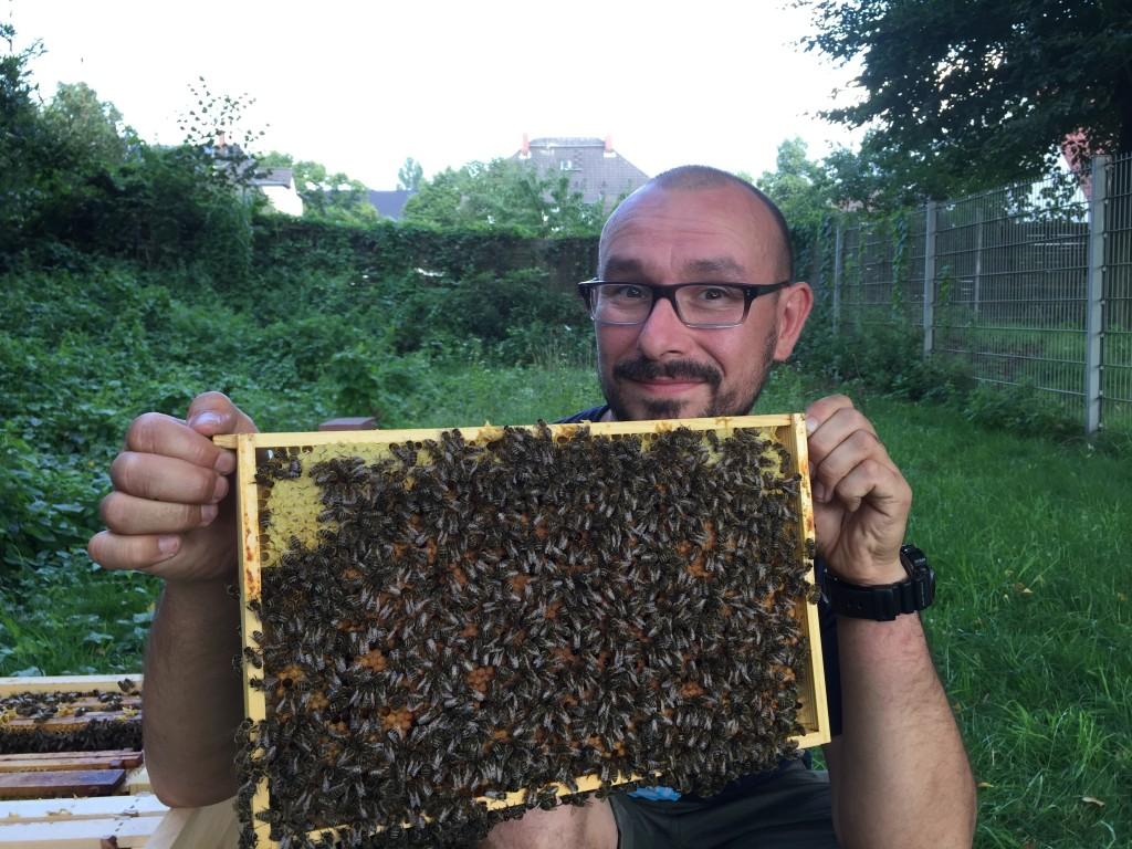 Artikel_Bienen_Bild