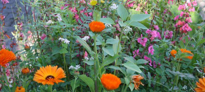 Blühstreifen – der zweite Anlauf